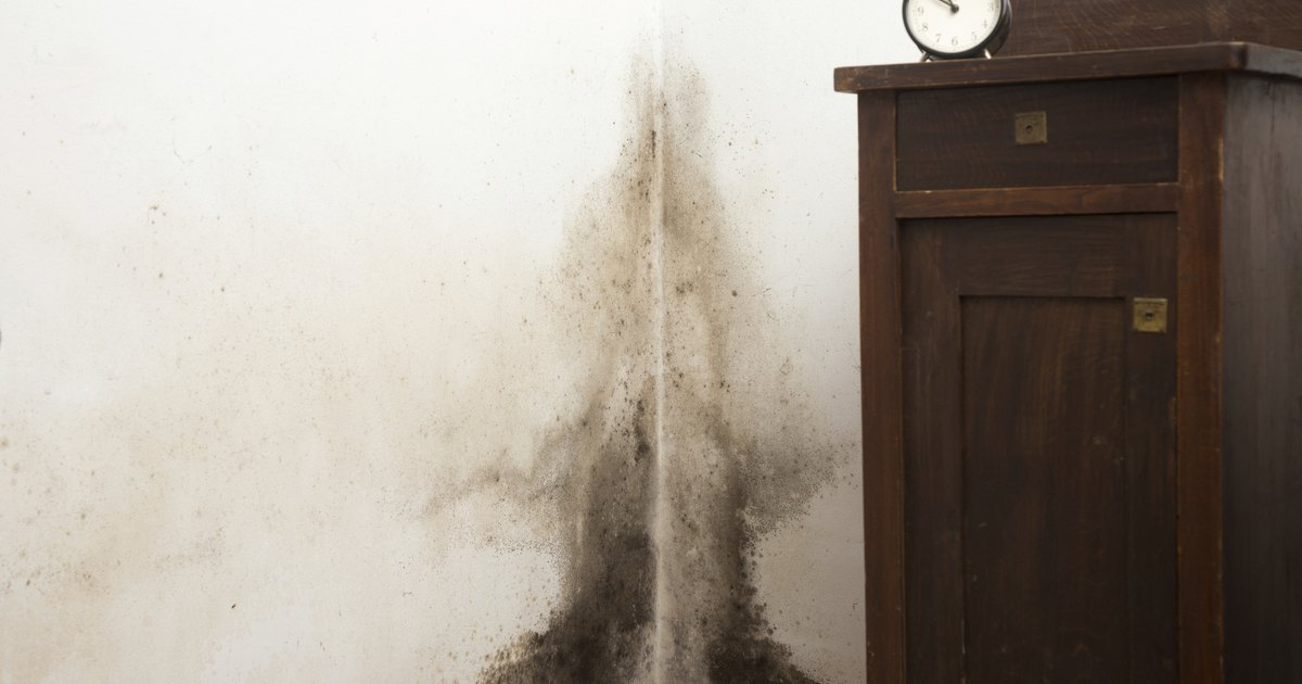 what are the dangers of black mold in houses livestrong com. Black Bedroom Furniture Sets. Home Design Ideas