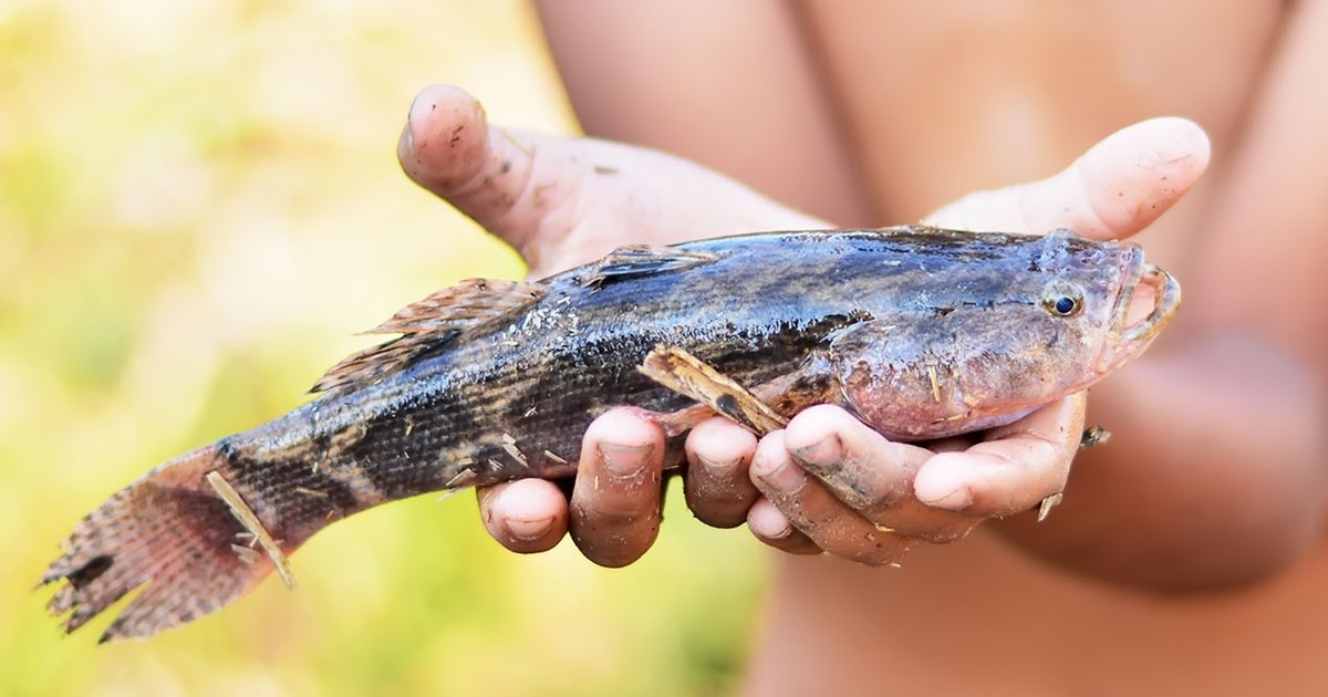 Grass carp fishing tips livestrong com for Grass carp fish