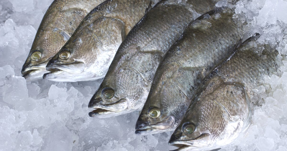 Fresh Bass Fish Recipes