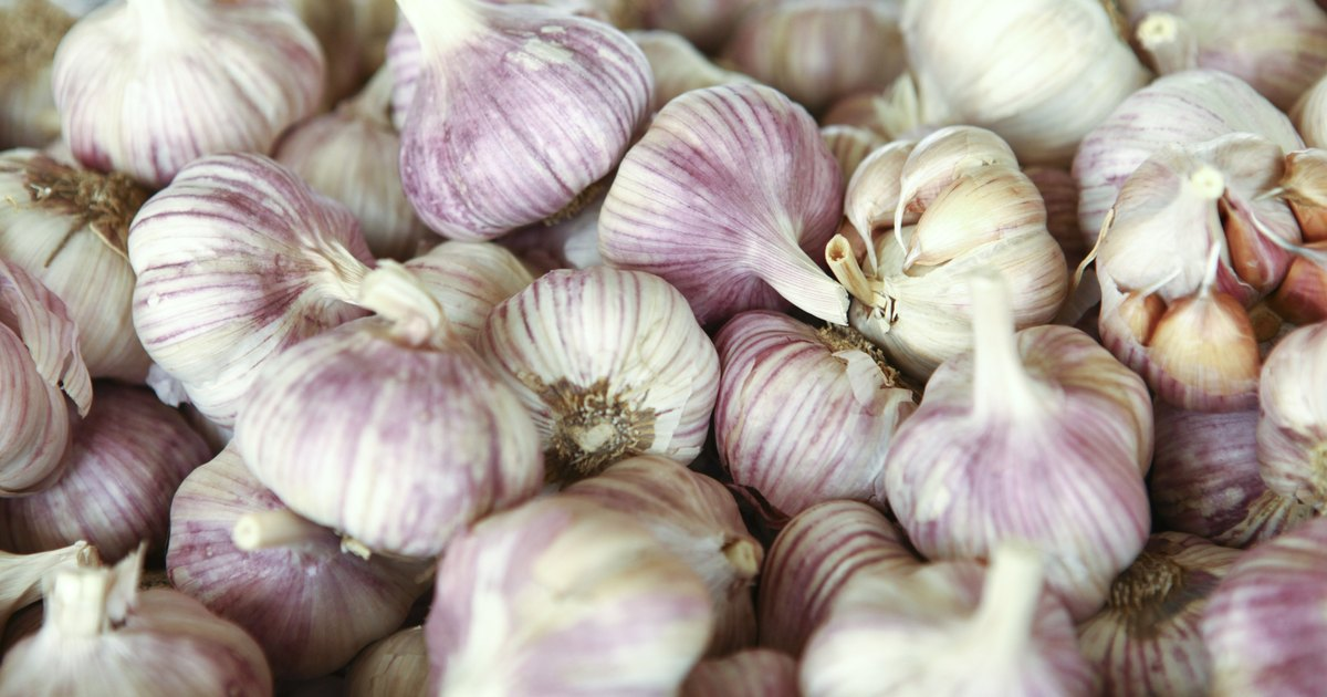 efficacy of garlic in preventing hypertension High blood pressure casts doubt on the effectiveness of garlic to evidence regarding the effects of garlic in preventing or treating the.