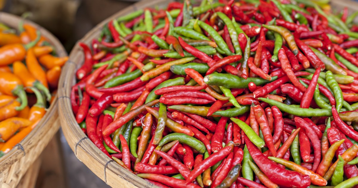 The feasibility of Cayenne pepper and Pandan extract as larvicide Essay