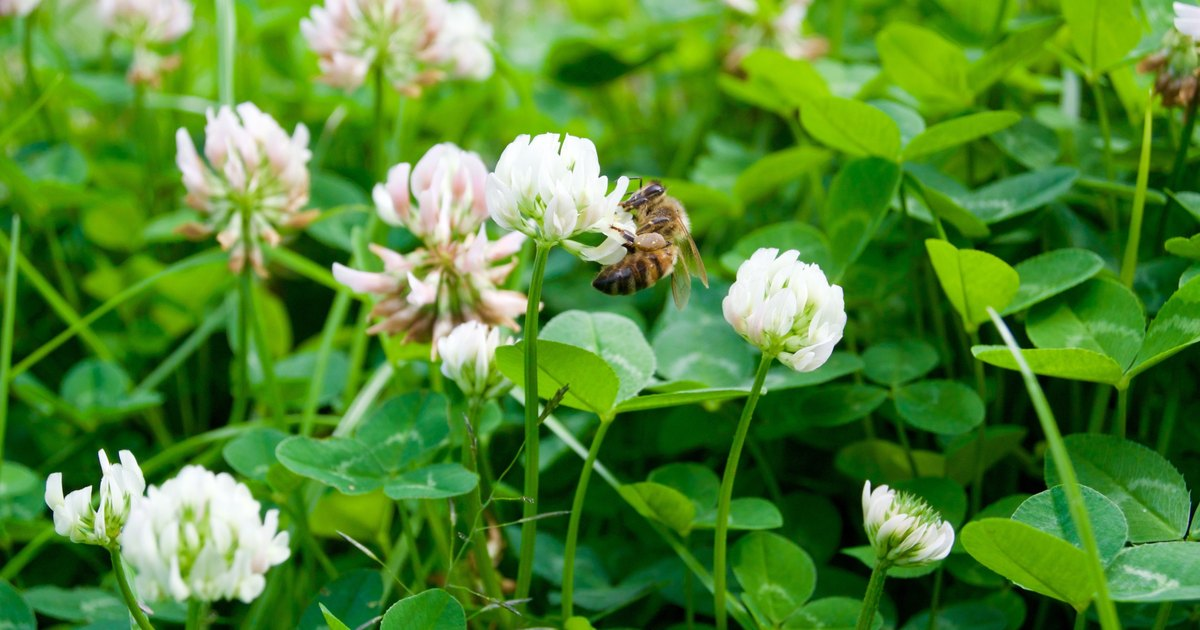 clover honey nutritional facts
