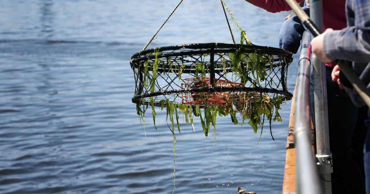 Crab fishing in north carolina livestrong com for Freshwater fishing in north carolina