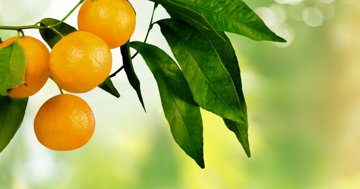 How Fattening Are Oranges?
