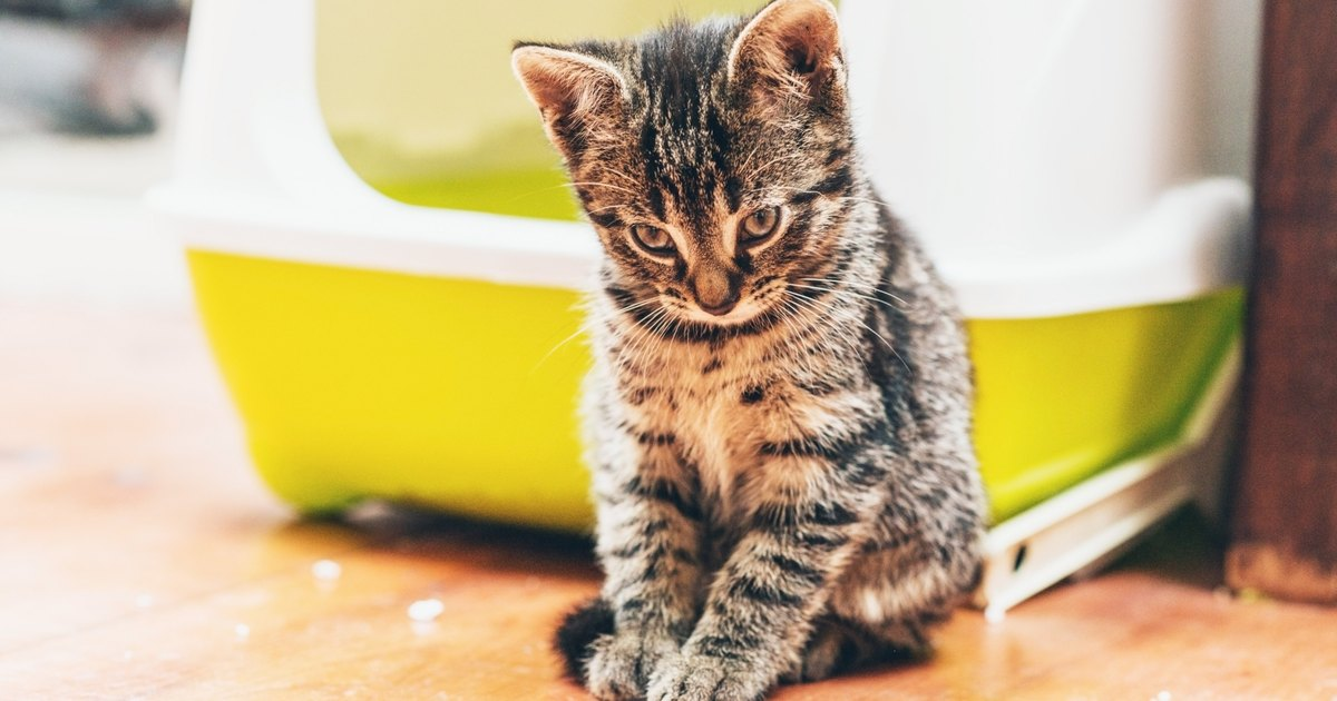 cat insurance pet insurance