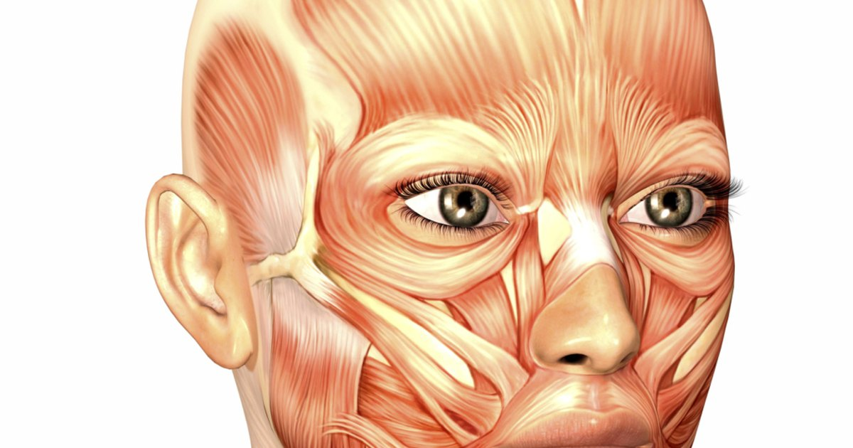 What Muscles Move the Jaw | LIVESTRONG.COM