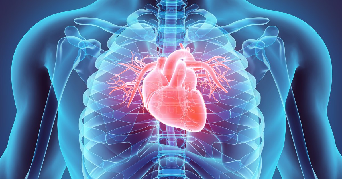 Structure & Functions of the Cardiovascular System ...