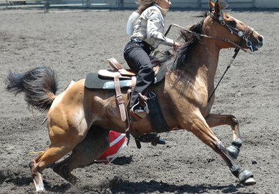 Barrel racing saddles are designed for performance and speed.