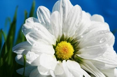 Chamomile may repair brain cell damage.