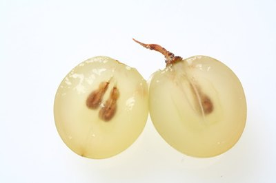 Grape seed extract provides powerful anti-oxidant properties to the skin.