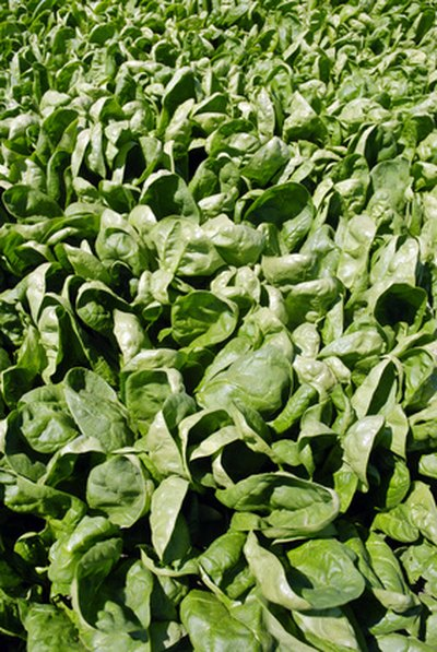 The Drawbacks of Spinach As an Iron Supplement
