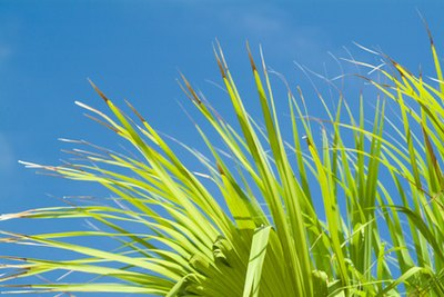 The Effects of Saw Palmetto on Women With too Much Androgens