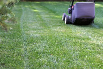 How to Lose Weight by Mowing the Lawn