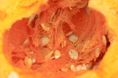 Squash seeds are small but nutrient-rich.