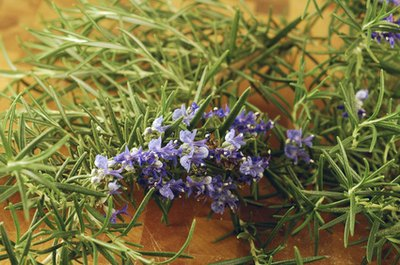 Rosemary is believed to be soothing when added to a foot bath.