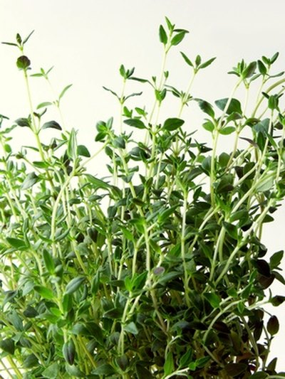 Thyme has antimicrobial properties.