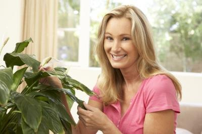 Houseplants improve air quality.