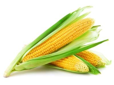 Why Does the Human Body Not Digest Corn?