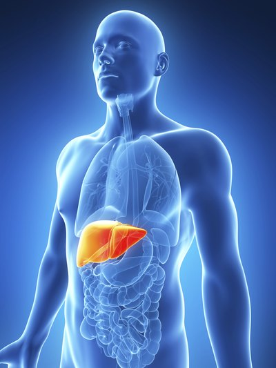 Liver Function and Cholesterol Levels