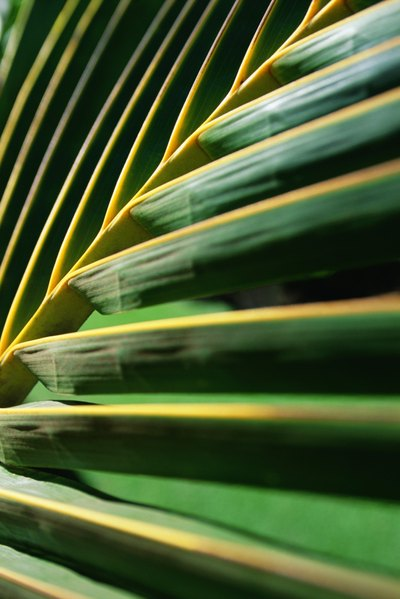 Palm Sunday Games for Kids
