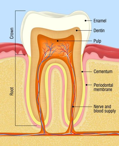 Tooth enamel begins dissolving at a pH level of around 5.5.