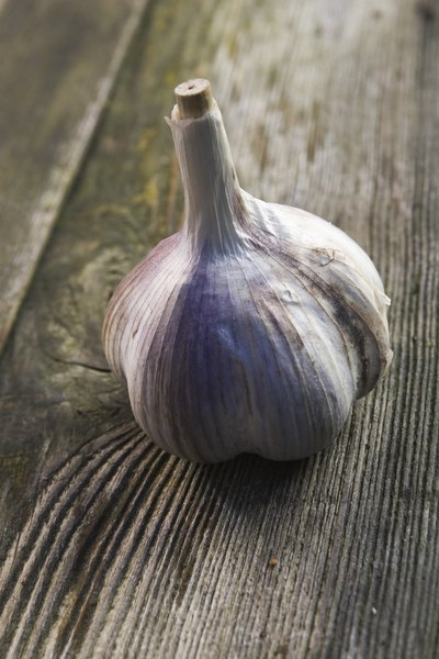 Can Eating Garlic Help to Lose Weight?