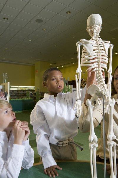 Major Bones of the Skeletal System