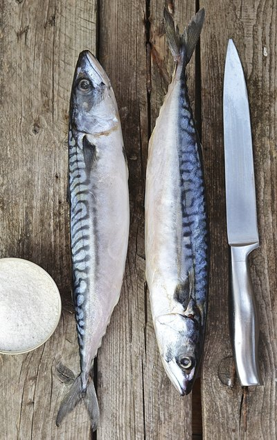 Which Fish Contain Omega-3 Fats?