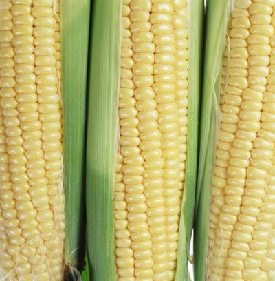 Is Corn a Healthy Food?