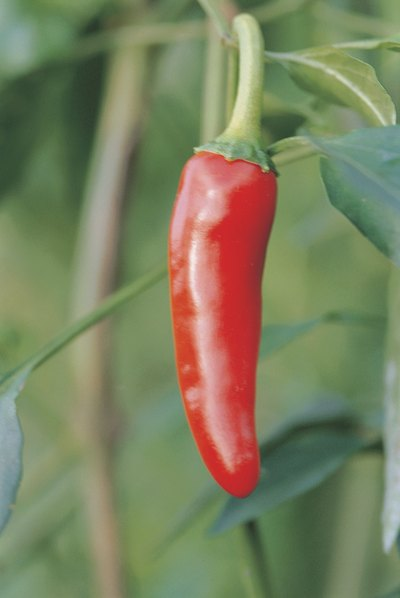Cayenne Pepper and Anxiety