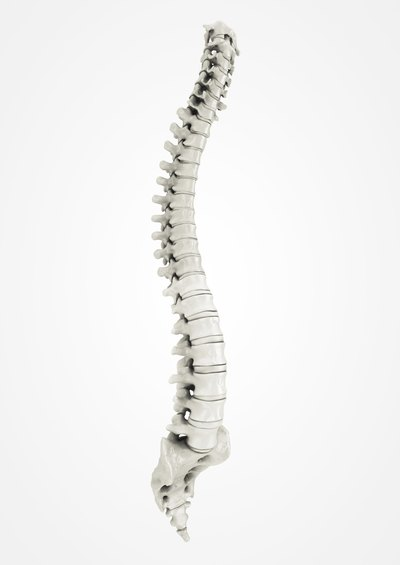 Thoracic Spine Degeneration Symptoms  Livestrongcom. Attorney General Of The United States. New Home Security Systems Personal Income Tax. Testosterone Replacement Therapy Pros And Cons. Home Security Systems Lexington Ky. Hospice Care New Jersey Dairy And Osteoporosis. Nursing Schools Phoenix Az Voice Over Studios. Septic Tank Cleaning Companies. Local Channels Dish Network