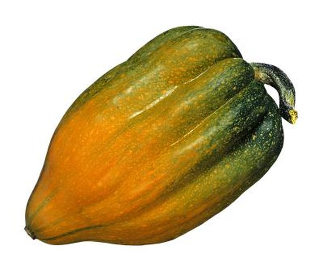 Types of Squash – Summer and Winter Squash