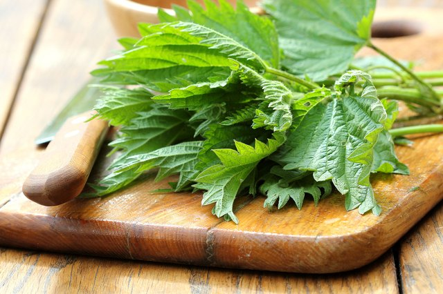 Nettle leaf tea or dried nettle leaf capsules will stop the sneezes.