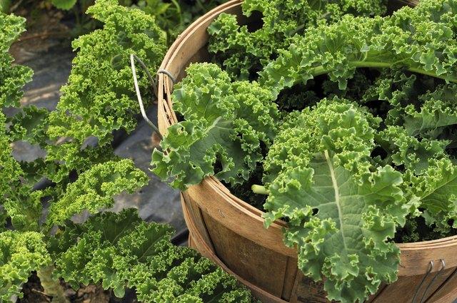 Basket filled with kale