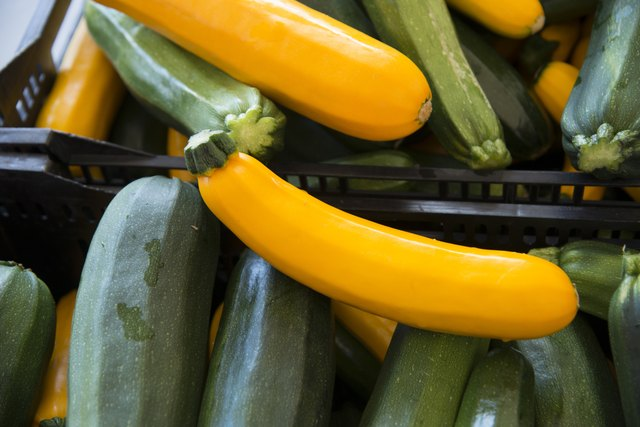 zucchini and squash vegetables