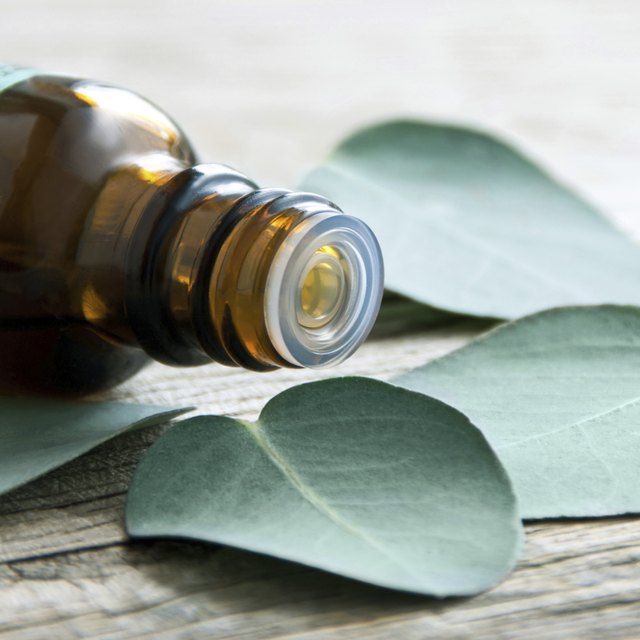 A bottle with eucalyptus oil and leaves on table