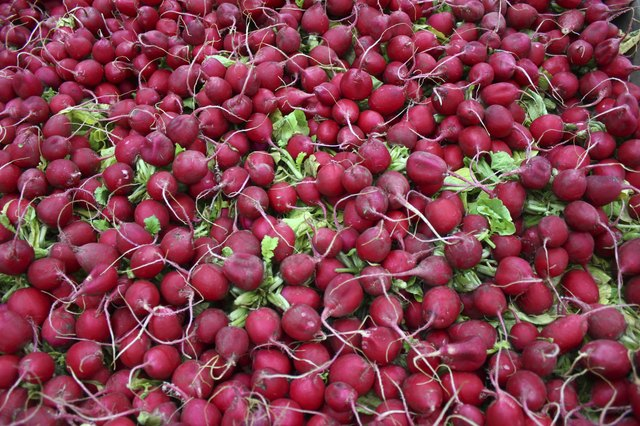 giant assortment of radishes