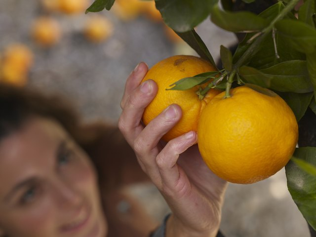 Oranges contain natural sugars.