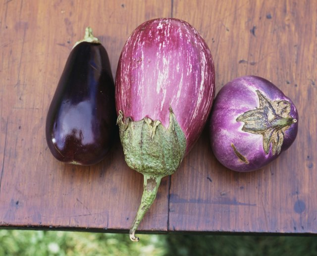 All varieties of eggplant are nightshade vegetables