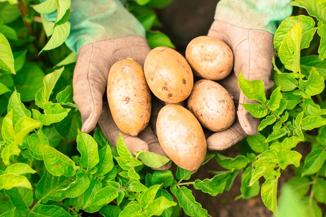 Potatoes contain vitamin C.