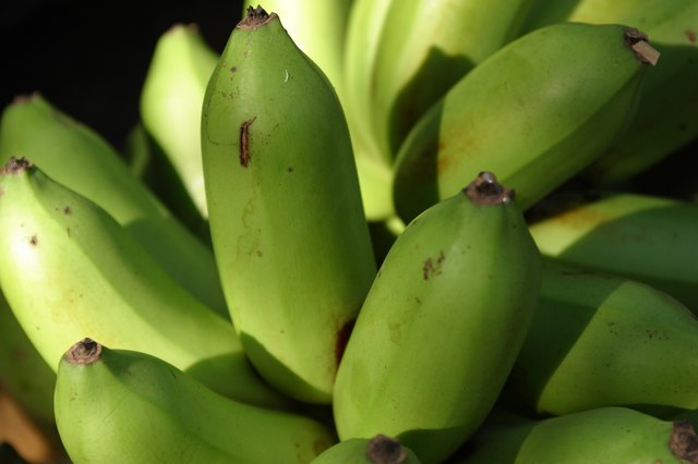 Plantains are a rich source of fiber and vitamins C and A.