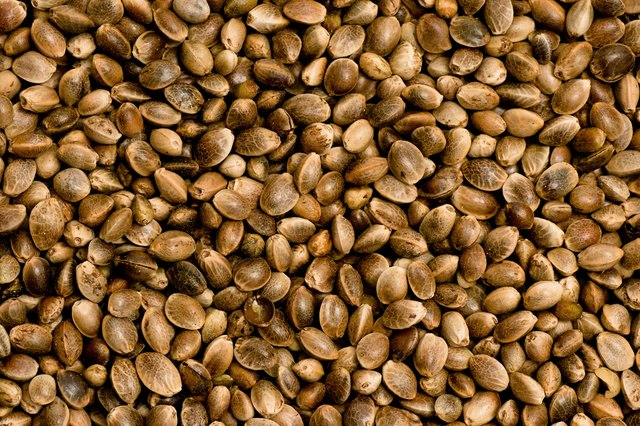 Nutritious Hemp Seed Sources