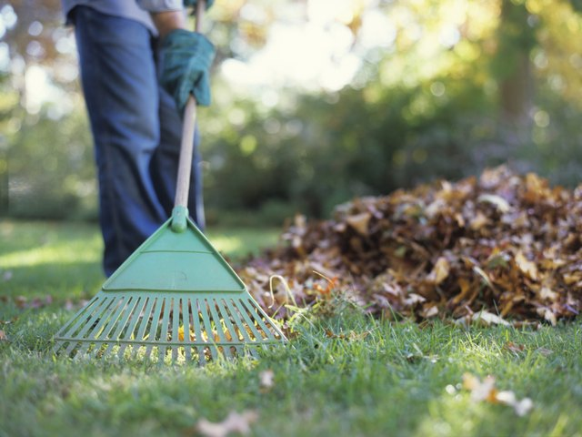 Person raking leaves on lawn.