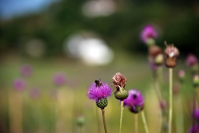 Centaury, horehound and blessed thistle have been approved as viable treatments for poor appetite.