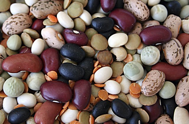 Beans are a natural source of glutamine