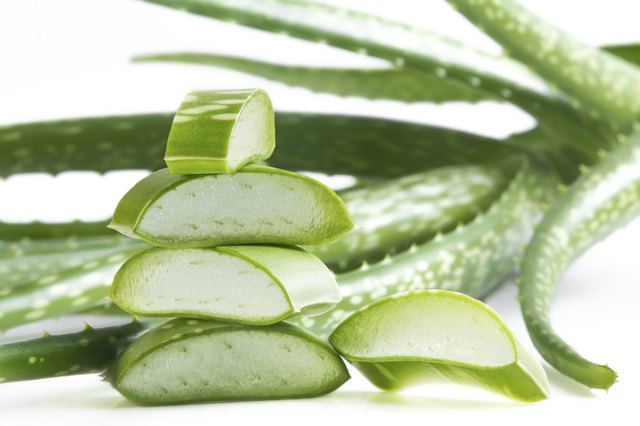 Aloe vera's ability to prevent hair loss is extremely questionable.
