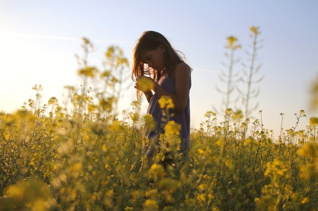 A little girl plays in a blooming field of canola plants. Does she realize this plant is pure evil?