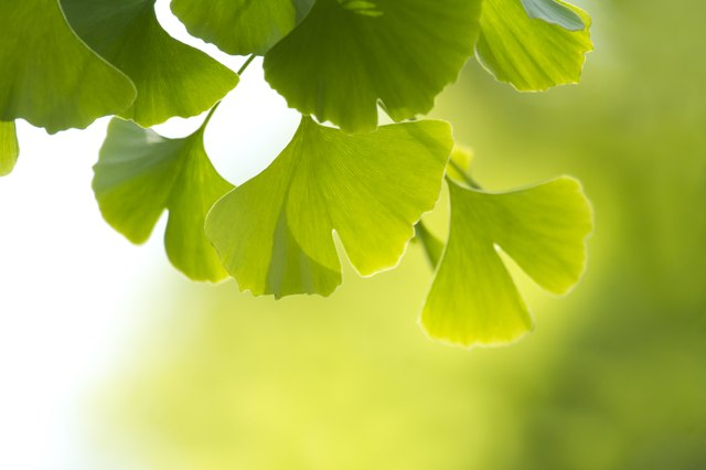 Ginko is one of the best selling supplements in the US.