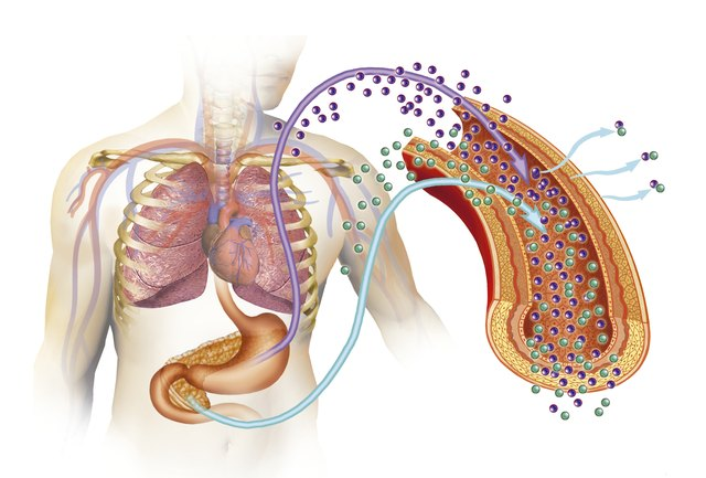 3D rendering of human digestion.