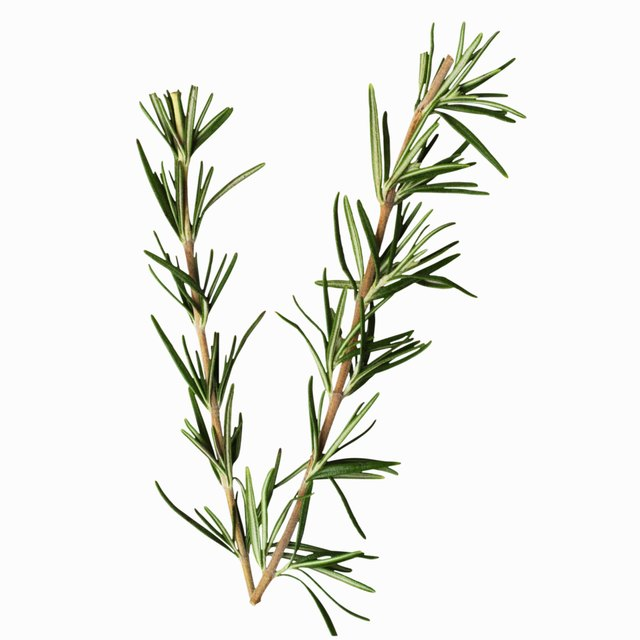 Avoid rosemary during pregnancy.